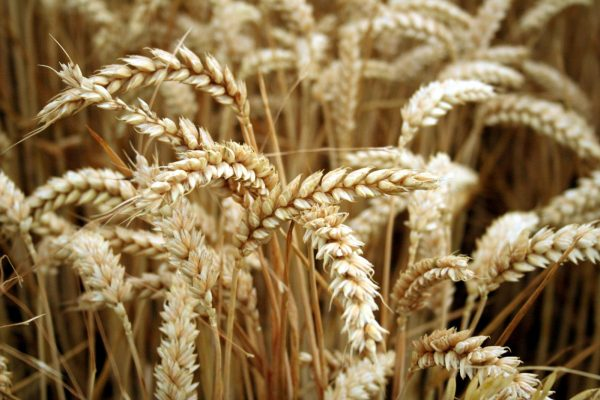 Gluten intolerant? Drug labelling might be about to get a whole lot clearer.